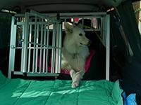 ectic-ch - Je transporte vos animaux - Chien